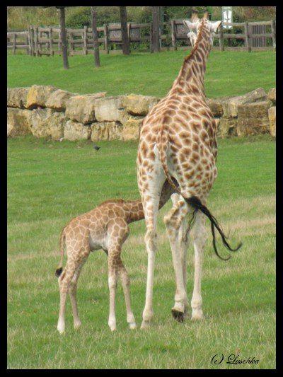 Attachment Parenting In Nature