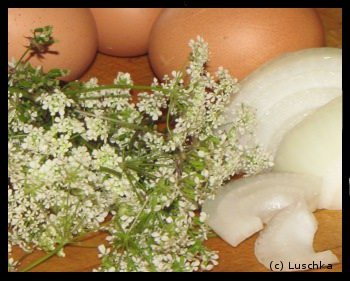Foraging for Food – Yarrow Omelettes And Tea