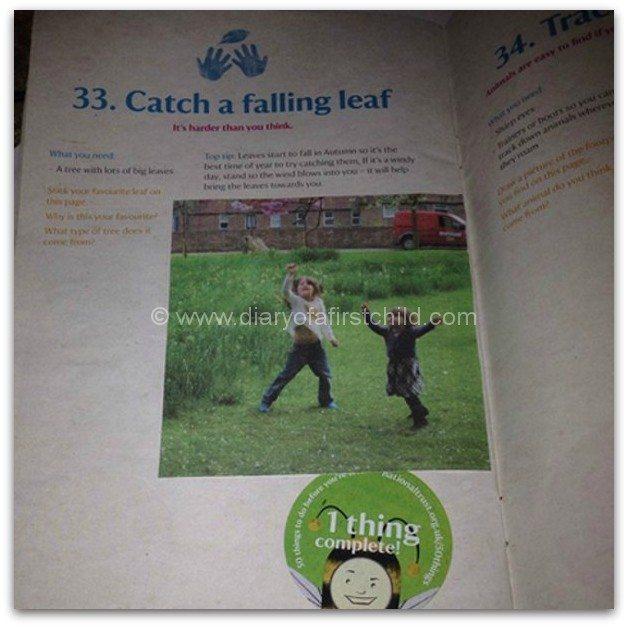 Catch A Falling Leaf