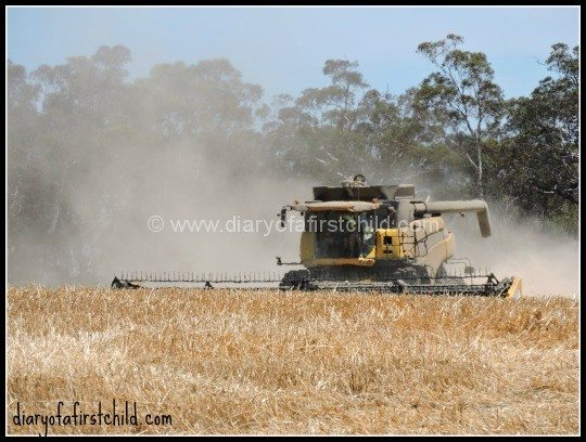 Harvesting Oats - Learning About Farming