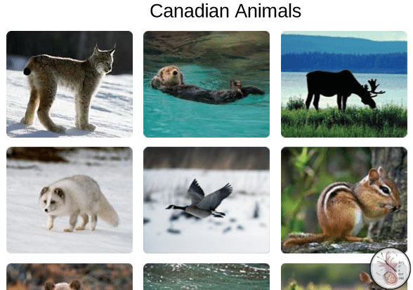 Classifying Animals Into Categories