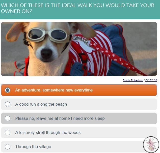 Dog Quiz